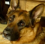 Dexter. Died 26 July 2014. A noble, courageous and much missed canine friend.